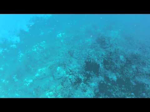 vie marine en martinique,croisement d'un joli thazar en fin de vidéo.