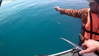 Рыбалка в Алуште 12 06 2021