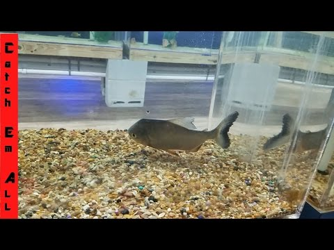 Thumbnail: NEW PET FISH FEEDING made BLOODY MESS! Identify All Species Challenge