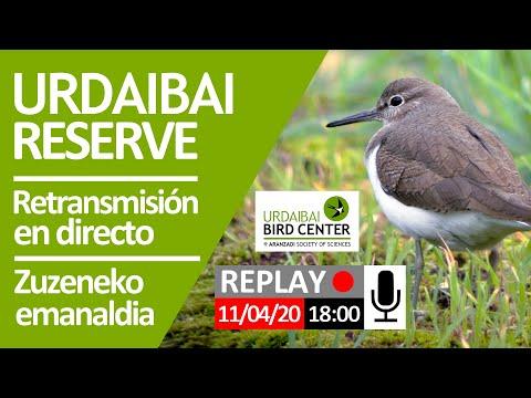 retransmisión-en-directo-2020-04-11,-sesión-de-tarde-(18:00)