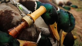 Duck and Goose Hunting: Mallards, Specks, Canada Geese, and Snow Geese - Fowled Reality Season 2
