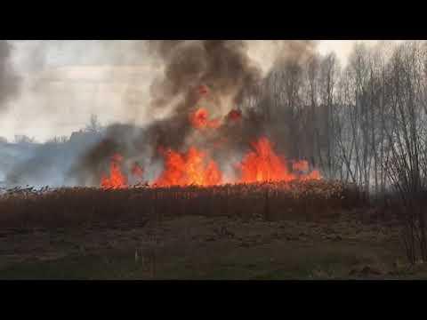 ObjectivTv: На Харьковщине люди подожгли 90 гектаров полей за сутки