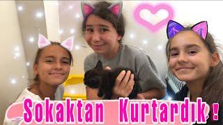 Kedi Sahiplendim - Yavru Kediyi Sokaktan Kurtardık !! GECE'nin Hikayesi