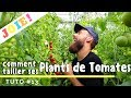 Pieds De Tomates : Comment Les Entretenir ? - Tuto #13