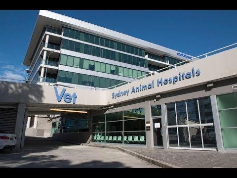 Welcome To Sydney Animal Hospitals