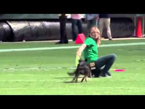 how to teach a french bulldog to do a backflip