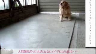 犬しつけがパソコンで見れる http://bit.ly/24Be4OP 大問題児だった犬が...