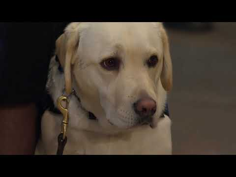 WATCH: Sully The Service Dog Honors President George H.W. Bush