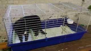 Käfighaltung für Katzen, artgerecht (Käfigkatze, funny cat compilation crazy lustig)