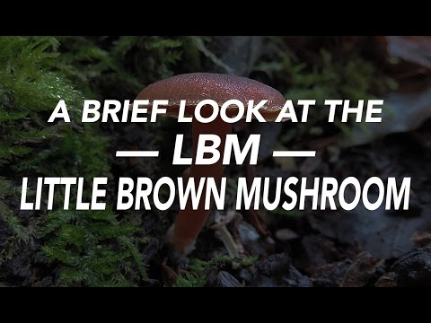 A Brief Look At The LBM —Little Brown Mushroom