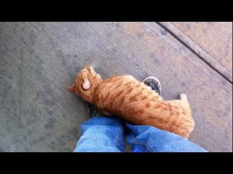 Adorable, Friendly Stray Cat
