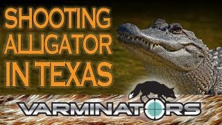 EXTREME Pest Control - Shooting Alligator in Texas