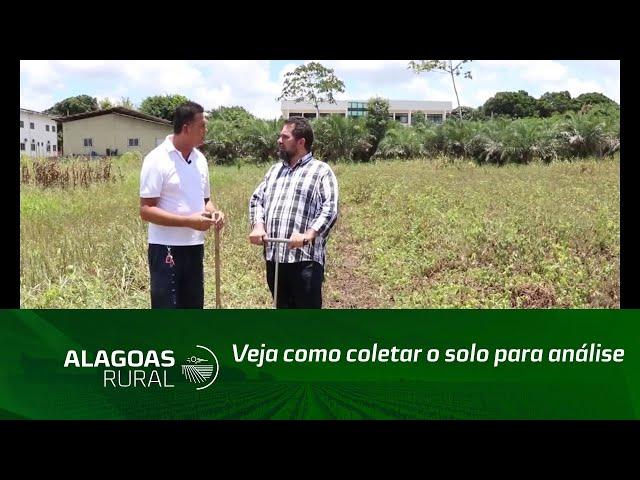 Confira algumas dicas de como deve ser feita a coleta de amostras para análise de solos