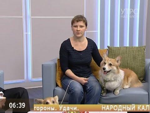 Вопрос: Собаки какой породы всегда жили у английской королевы?