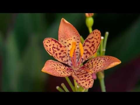 Lagu Tentang Lingkungan Alam (The Coach - Surat Cinta Untuk Alam)