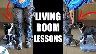 5 Puppy Training Exercises You Should Do EVERY DAY At Home!  Living Room Lessons