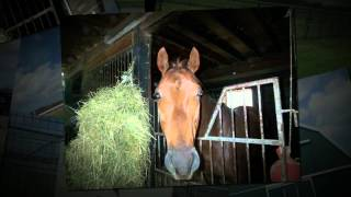 Equestrian Property For Sale in Ontario