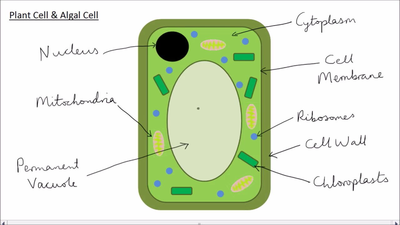 animal plant cells gcse science biology get to know science [ 1280 x 720 Pixel ]