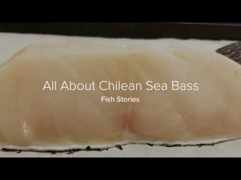 All About Chilean Sea Bass