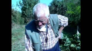 Щеплення горіха з Жадан В. М.: Частина 1. ІНСТРУКЦІЯ (walnut grafting instruction)