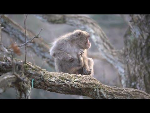 Travelling in Japan, Kyoto | Monkey Park & Samurai Castles | Hostelworld