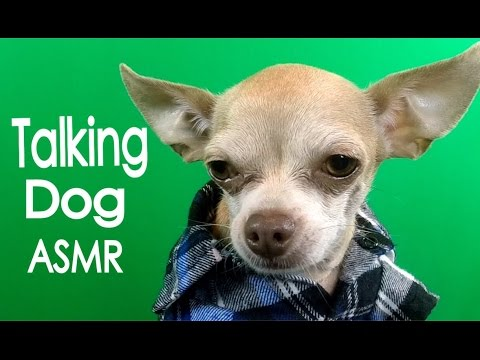 Talking Dog  *ASMR*