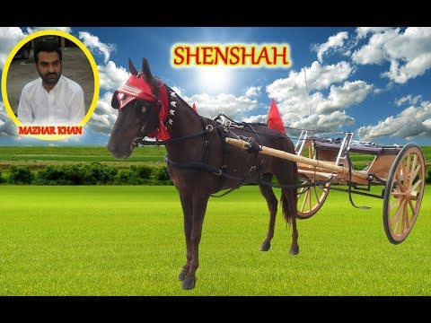 SHEHENSHAH VS JAAN E MAN...RACE 23.03.18...PART 001