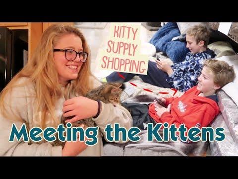 It's Friends Meeting Our Kittens + Kitten Supply Shopping!