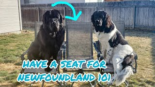 Newfie 101: Is a Newfoundland Dog Right For You?