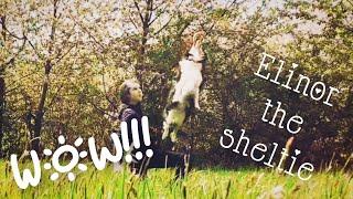 WONDERFUL DOG TRICKS by Elinor the sheltie