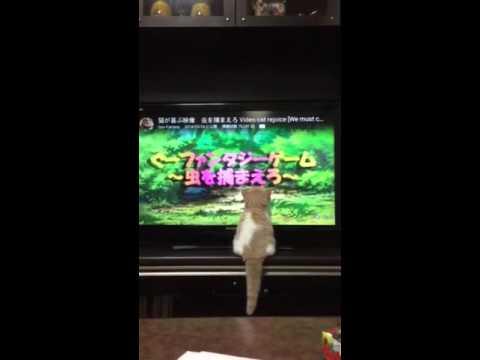 テレビで遊ぶネコ