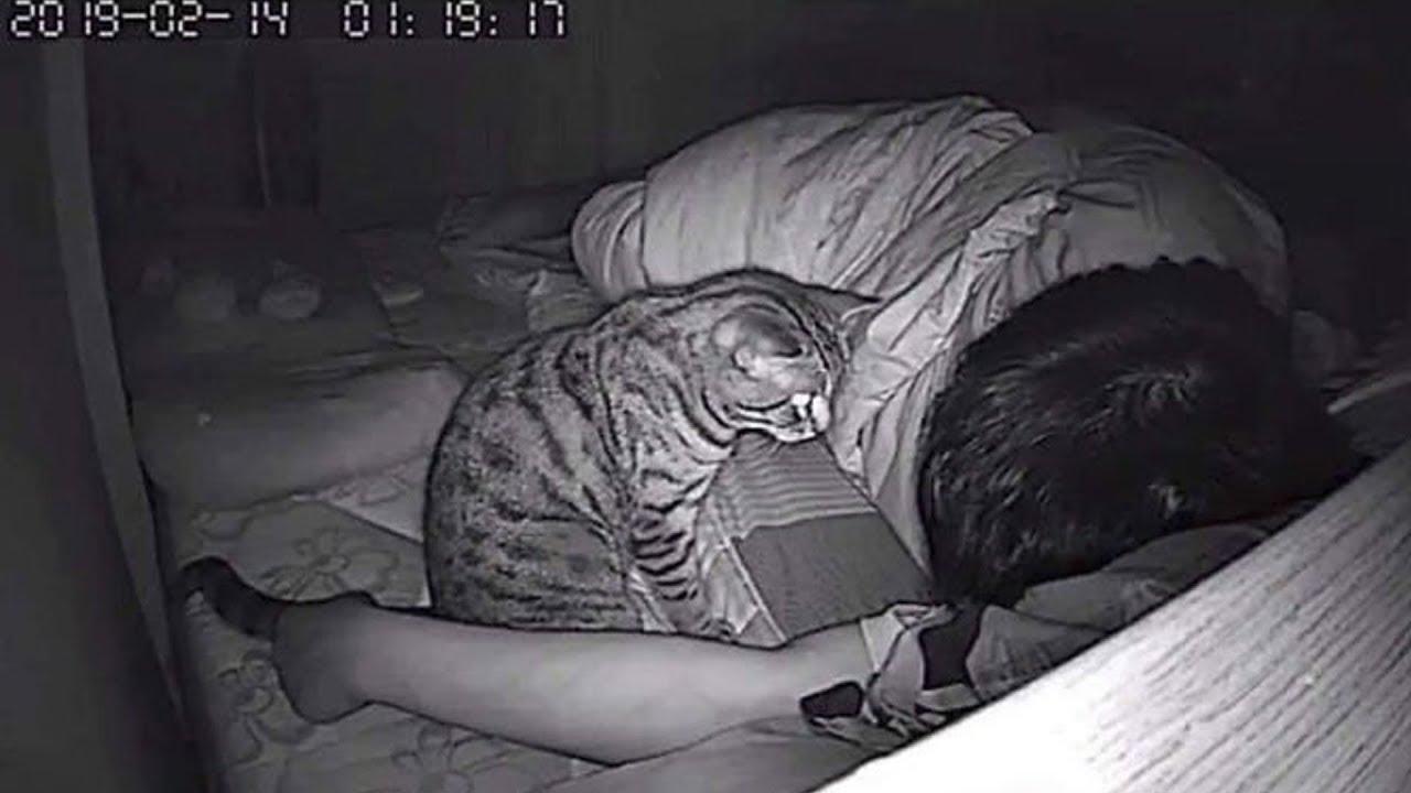 Он поставил скрытую камеру! И вот, что делает кошка, пока он спит MyTub.uz