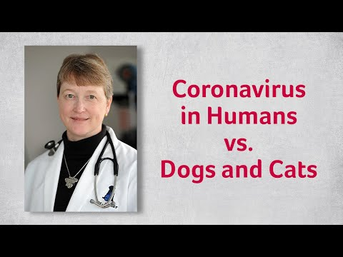 Coronavirus In Humans Vs Dogs And Cats