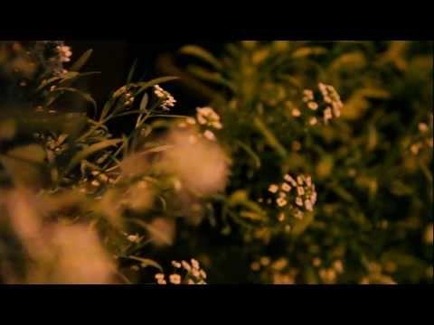 Алиссум, маленькие белые цветы которые пахнут мёдом.