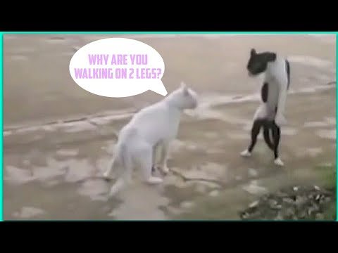 Funny Cats Dancing To Music - Cats Dancing To Music Compilation 2017