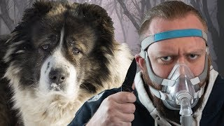 Top 10 Dog Breeds To SURVIVE THE APOCALYPSE With!
