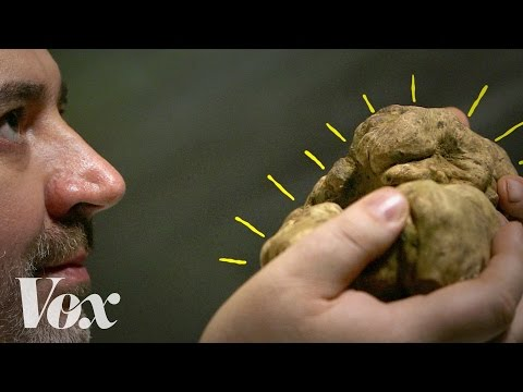 Why Truffles Can Cost $2,500 Per Pound