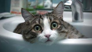 Коты пугаются. Приколы с кошками, самые смешные коты.