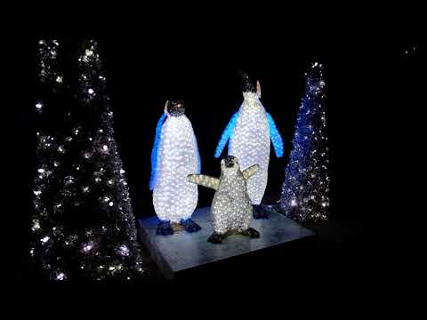 Download Youtube: Nighttime Christmas Decorations at Busch Gardens Tampa Christmas Town 2017