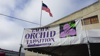 Pacific Orchid Expo 2016(, 2016-03-02T07:53:41.000Z)