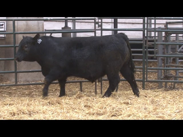 Schiefelbein Angus Farms Lot 129