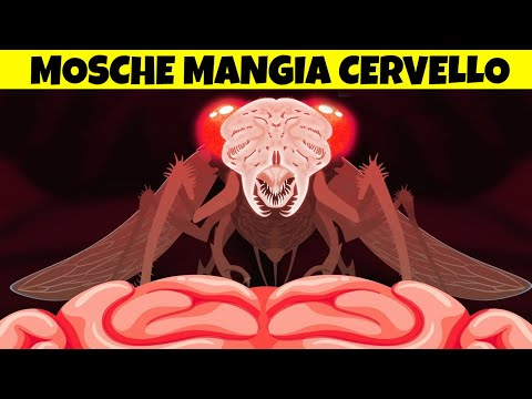 Mosche Mangia Cervello Ti TRASFORMANO In Uno ZOMBIE