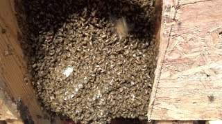 A fifth of JD or a fifth swarm from the bee hive house