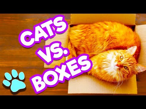 Cats Vs. Boxes   Cats Love Boxes   #thatpetlife
