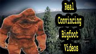 REAL Convincing videos of Bigfoot | Cryptids