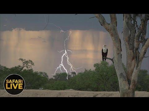 safariLIVE - Sunset Safari - December 5, 2018