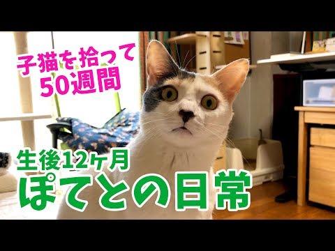 子猫を拾って50週間・ぽてとの日常【生後12ヶ月】