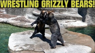 WRESTLING GRIZZY BEARS!! CLEVELAND METRO ZOO (JUNE 2017)