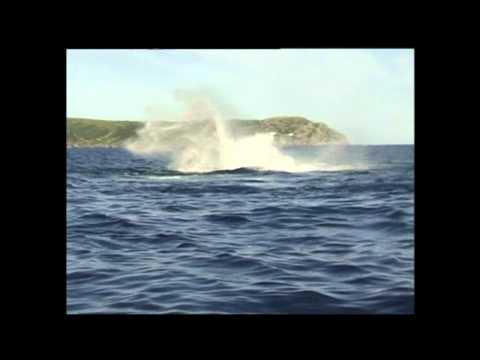 Close Encounters: Snorkeling with Whales | Whale Montage, Newfoundland and Labrador