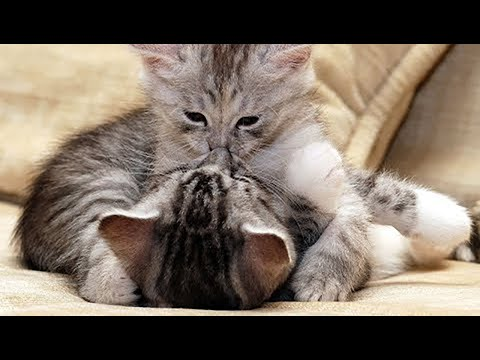 Cats are Kissing - Cats Knocking Over Stuff